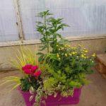 Jardinière milesia 40cm 5-6 plantes