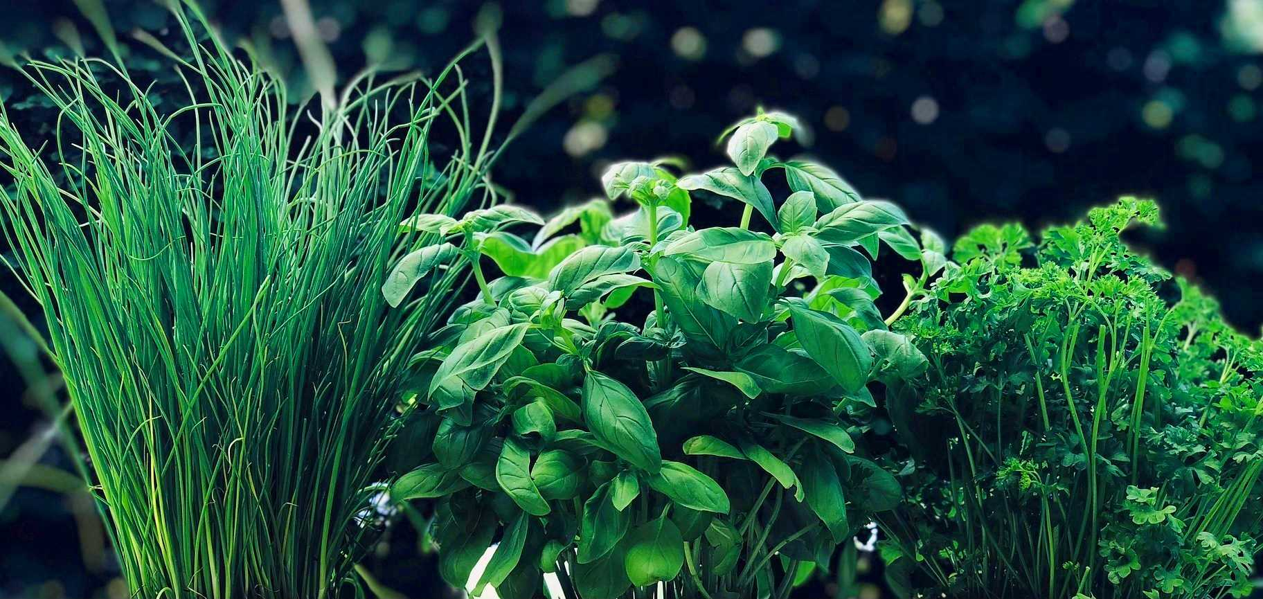 Aromatiques Geny Cernay
