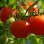Tomates grappe Geny Cernay