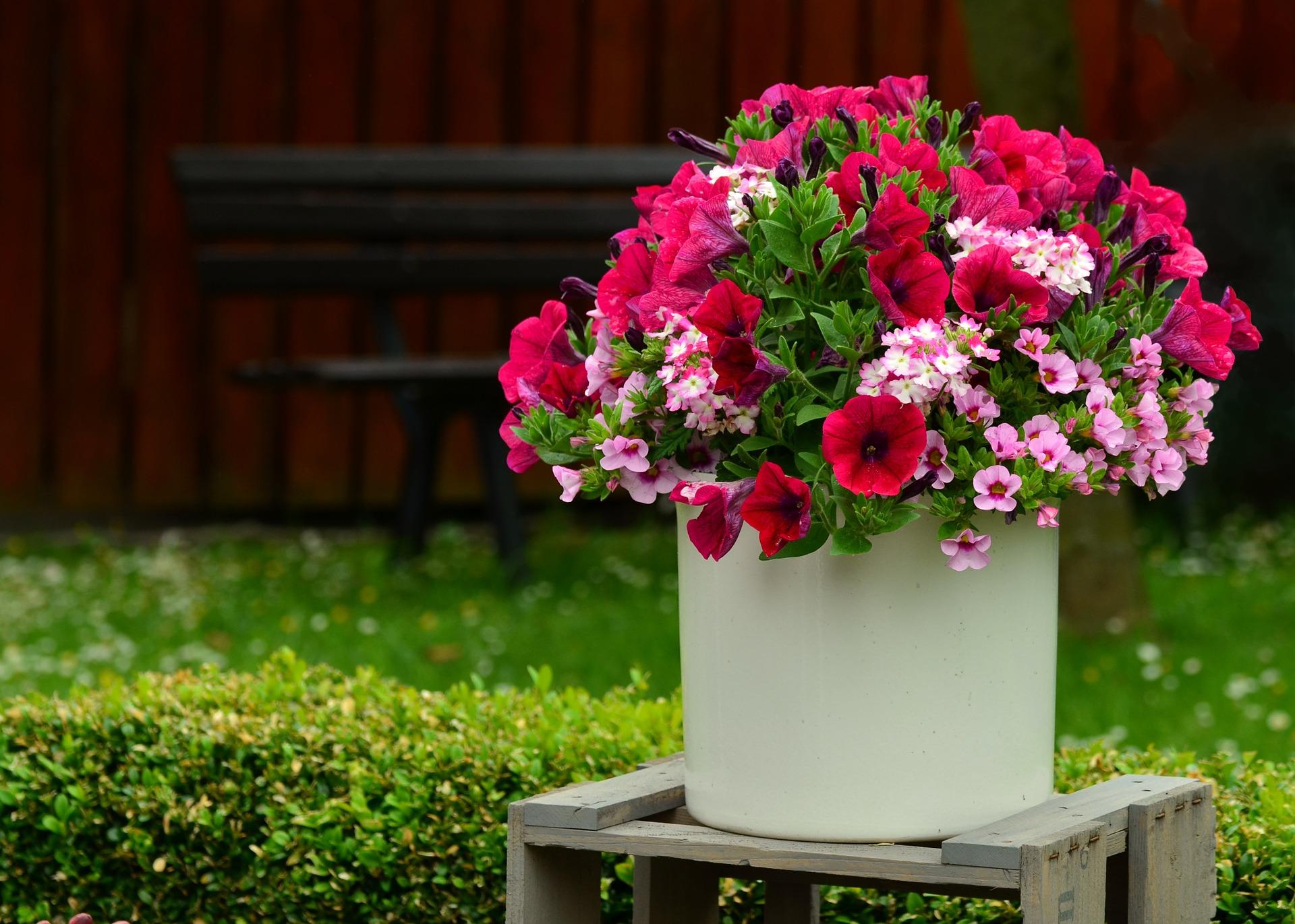 Confetti plantes de balcon Geny Cernay
