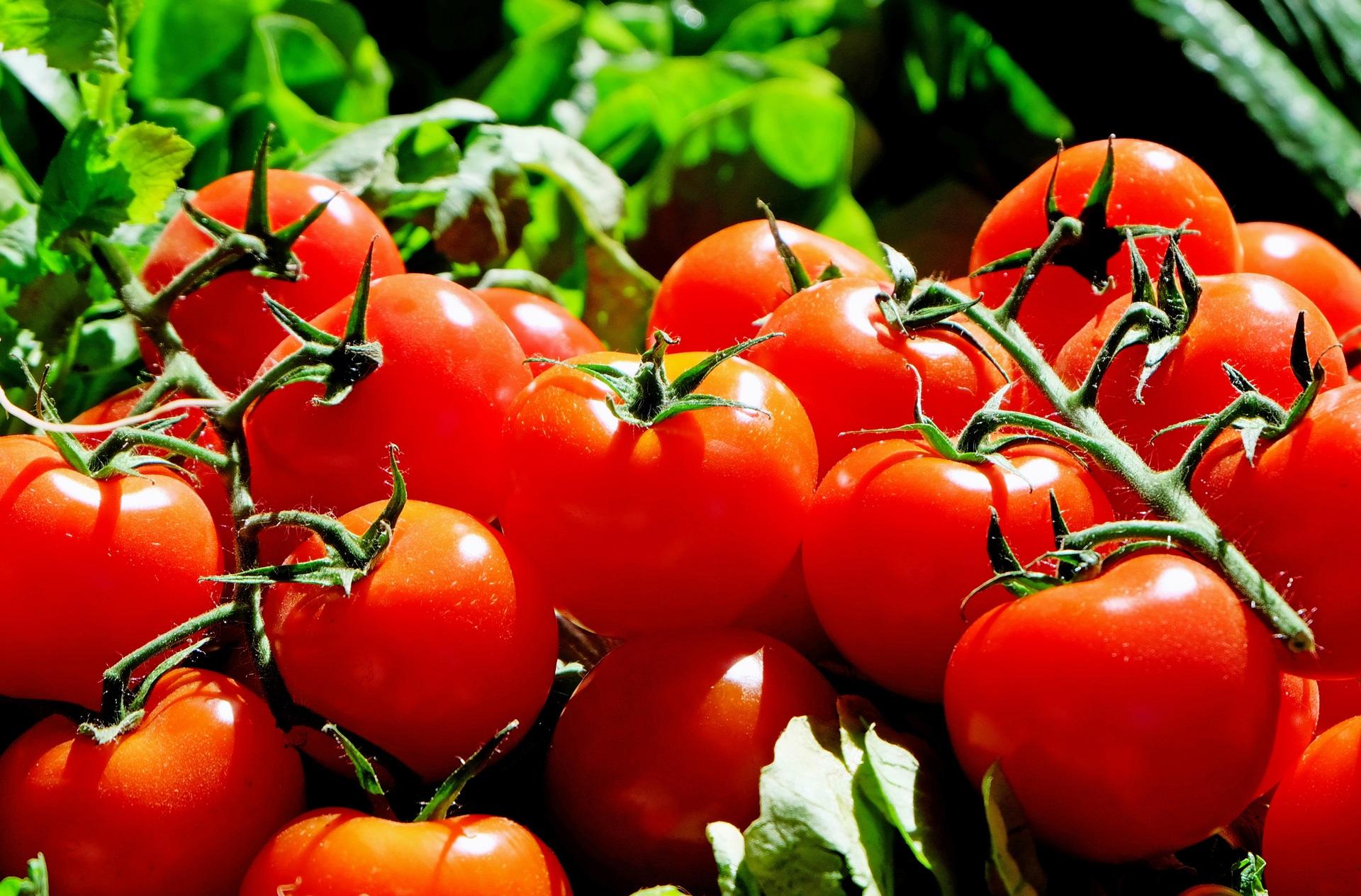 Tomates Geny Cernay
